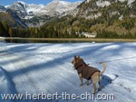 Wandern Wurzeralm Hund Brunnsteinersee