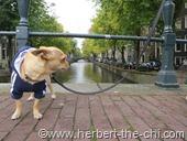 Eine der vielen Brücken in Amsterdam.