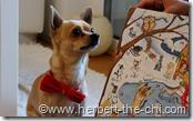 Hier mein Adventkalender für Hunde