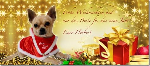 Frohe Weihnachten wünscht Herbert the Chi!