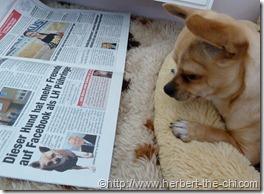 """Ich in der Tageszeitung """"Heute"""""""