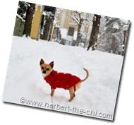 Winterspaziergang mit rotem Karo-Pulli