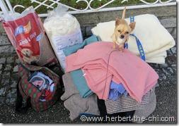 Spenden für Hunde in Ungarn und Serbien