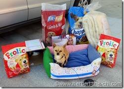 Spenden für arme Hunde