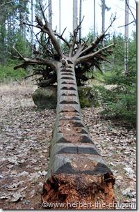 Der Erlebnisweg Moorwald in Bad Leonfelden