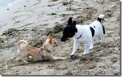 Fun am Hundestrand Lignano