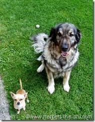 Mein Freund Gandalf und ich