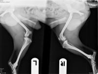 Röntgenbild von Herbert