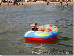 "Urlaub am Hundestrand ""Doggy Beach"" in Lignano"