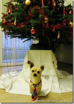 Herbert feiert Weihnachten