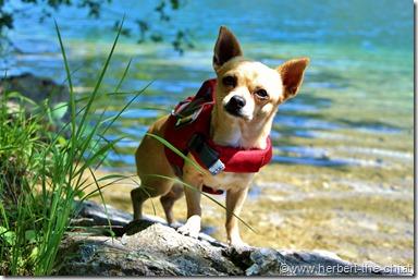 Meine Hundeschwimmweste von Ruffwear