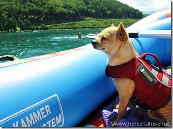 Urlaub Kärnten Hund Klopeinersee