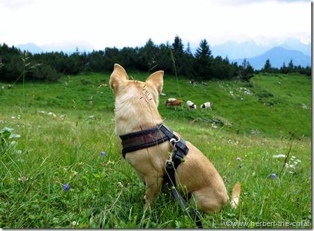Kärnten Wandern Hund Hochobir