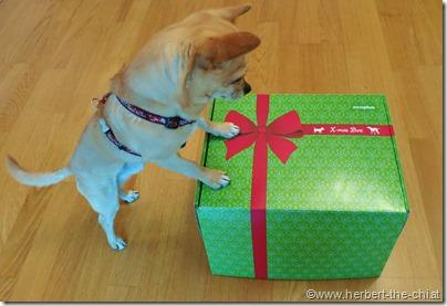 Hund Weihnachten Geschenk