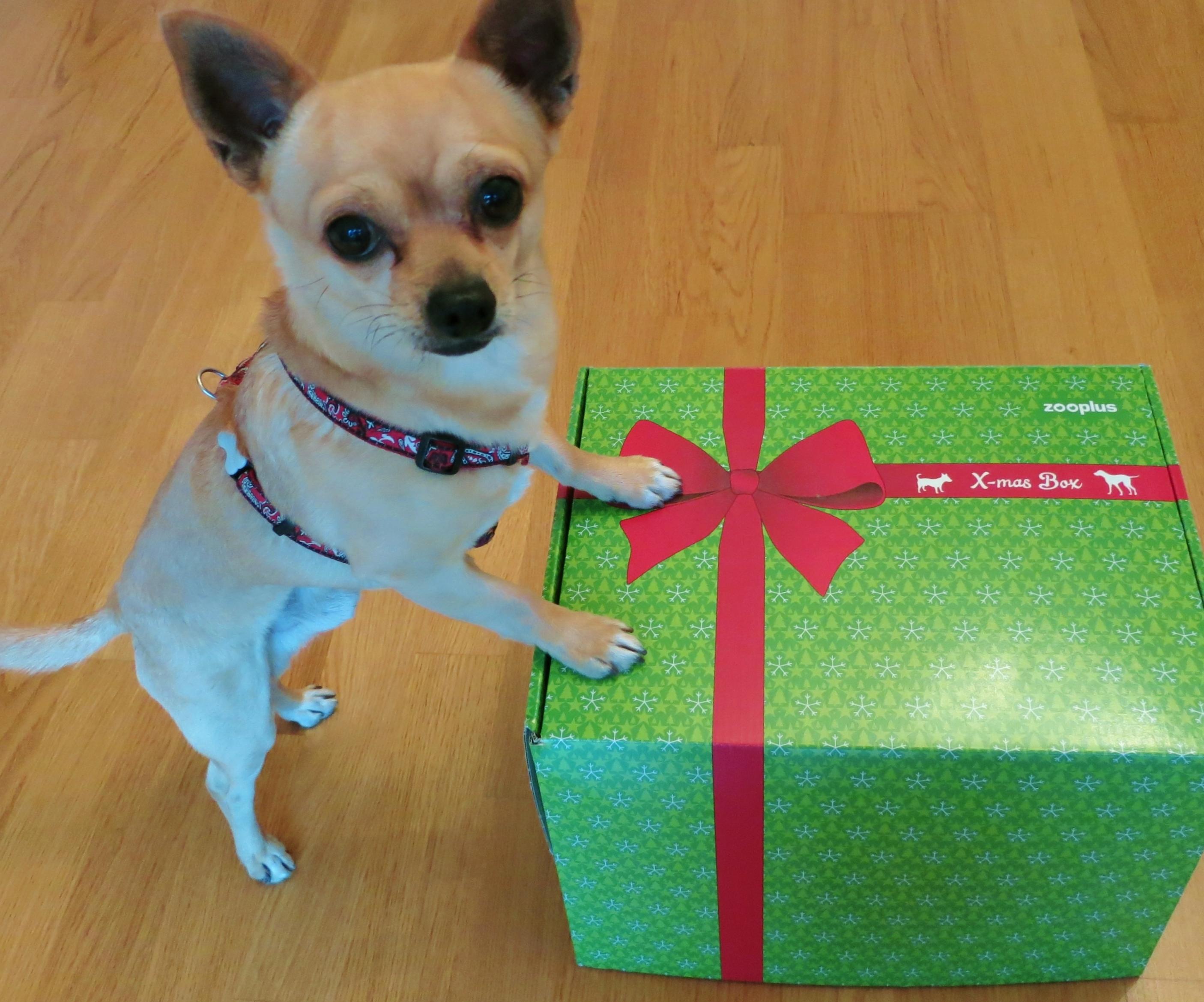 Was dem Hund Weihnachten schenken? | Herbert the Chi