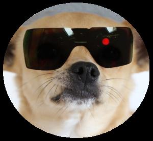 Hund unterwegs Chihuahua