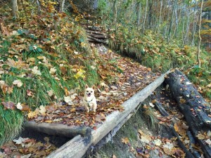Jahresrückblick 2015 Chihuahua