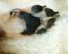 Pfotenschutz Hunde Pfote