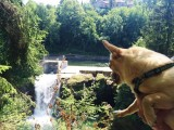 Ausflug-Wasserfall