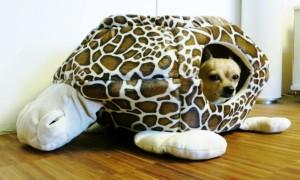 Hundebetten Test Kuschelhöhle