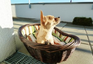 Hundebetten Test Weidenkorb