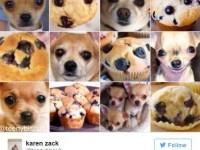 karen-zack-chihuahua-or-muffin