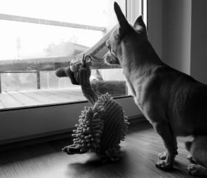 Ostern Hund Kuscheltier