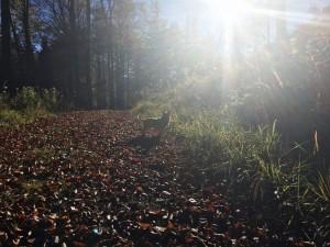 Moasnkogerl Wald