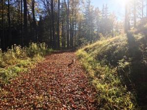 Moasnkogerl Wanderung Wald