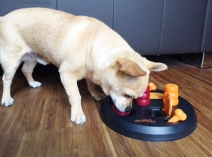 Spiele Hund Intelligenzspiel