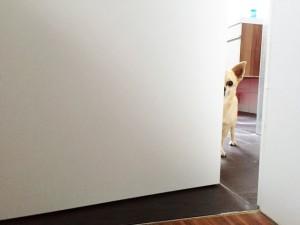 Spiele Hund Suchspiel