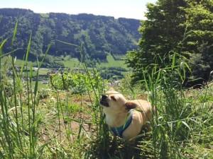 Hund frisst Gras Ausflug