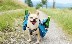 Hunderucksack Bier Tranksport