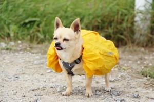 Hunderucksack Regenschutz Wanderung
