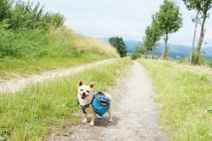 Hunderucksack Ruffwear Ausflug