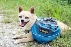 Hunderucksack Ruffwear Taschen