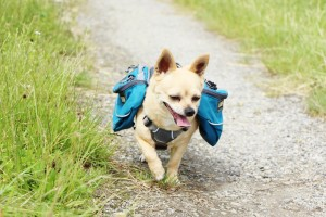 Hunderucksack Ruffwear Wanderung