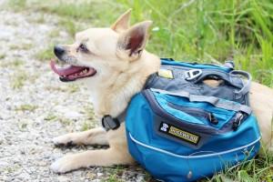 Hundetragetasche Chihuahua