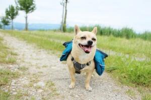 Hundetragetasche Produkttest