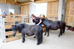 Neubauers Stadtstall Ponys