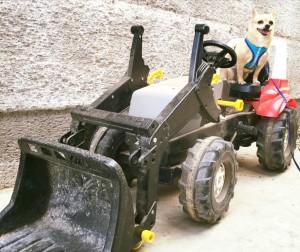 Neubauers Stadtstall Traktor Hund