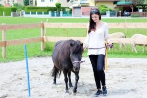 Neubauers Stadtstall Pony Agility
