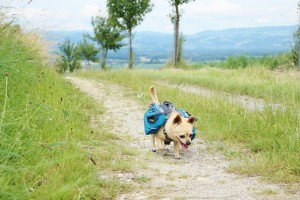 Wandern Hund Rucksack