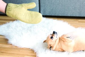 DryGloves Trockenhandschuhe Hund