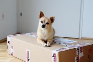 Dogsworld Paket