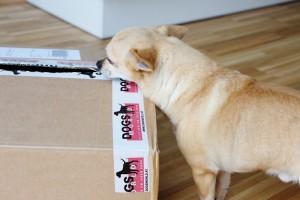 Dogsworld Produkttest