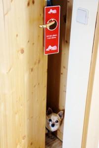 eschenhof-hund-alleine