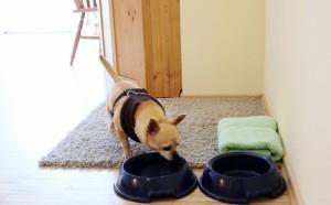 eschenhof-hund-zimmer
