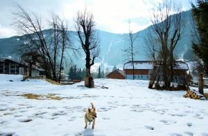 eschenhof-hundewiese