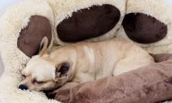 Hundebetten Test Kuschelbett